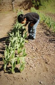 Gardening with Your Children, The Goddard School®